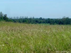 Prairie de Saintonge