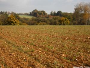 Site 14 - Champ cultivé